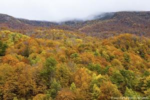 Forêt dans le massif des Pyrénées