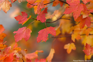 Feuilles_automne