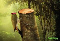 Campagne_deforestation_Sanctuar Asia_2