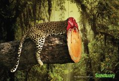 Campagne_deforestation_Sanctuar Asia_3