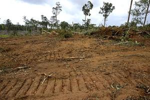Forêt primaire détruite par bulldozer - Guyane française -  -  -