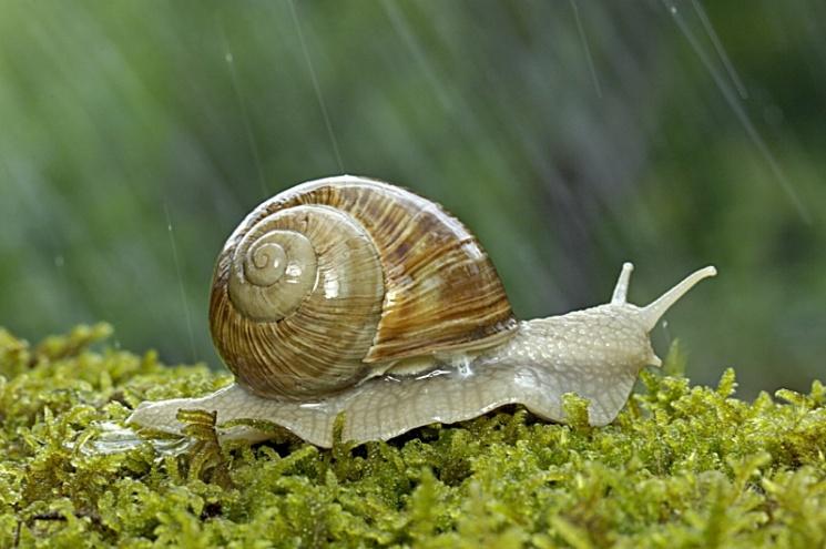 escargot sous la pluie