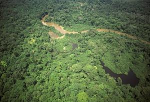 Vue aérienne de la forêt de l'aire protègée de Gamba - @ Aire protégée de Gamba -  -