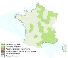 INPN_Soucoupe commune