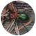 Visuel_Carabe à reflets cuivrés
