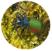 Visuel_Grand calosome