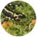 Visuel_Salamandre tachetée