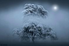 Arbre-hiver © Adrian
