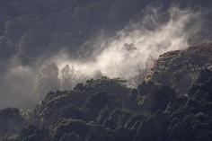 Forêt brumeuse au pied des Montagnes du Balé Ethiopie - Vers Goba: à 3000 m d'altitude. -  -