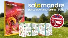 Salamandre-Noé