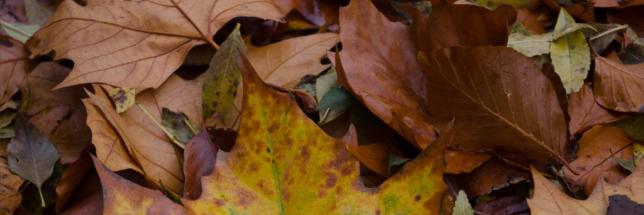 feuilles-bruno-parmentier-flickr