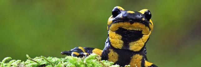 Observatoire de la biodiversité des forêts : la participation via l'application