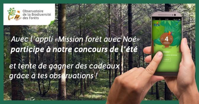 Concours de l'Observatoire de la biodiversité des Forêts : à la recherche des espèces cachées dans les bois!