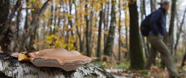 Cet automne, participez aux missions champignons de l'Observatoire de la Biodiversité des Forêts !