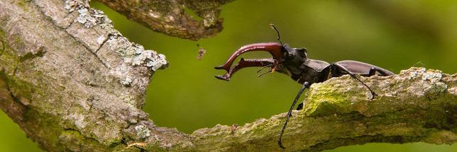 Une nouvelle étude pointe la disparition des insectes
