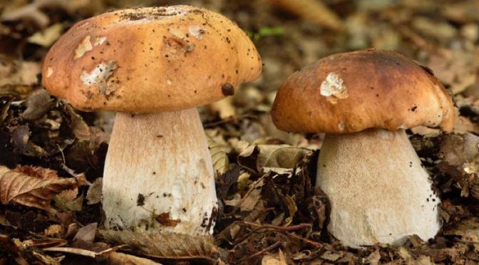 À la chasse… aux champignons !