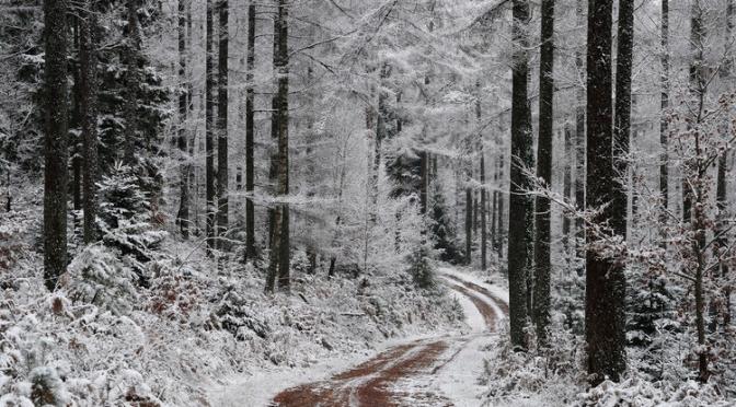 Que font les arbres en hiver ?