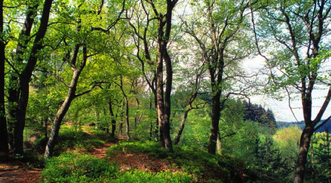 Les Observatoires en vacances dans les forêts de France