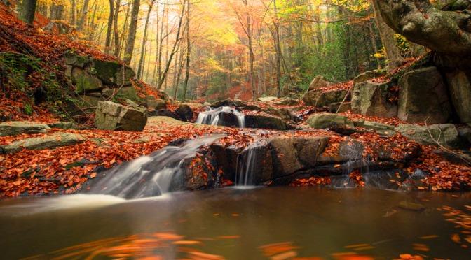 Les sciences participatives en forêt : l'Observatoire de la Biodiversité des Forêts