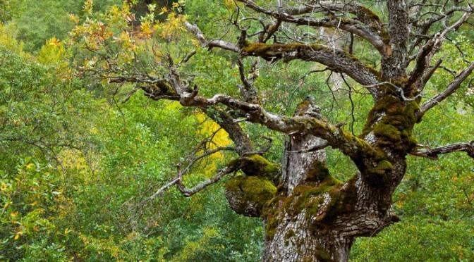 L'importance des vieux arbres et du bois mort en forêt
