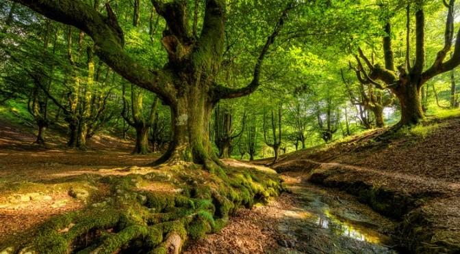 Les arbres en été, l'heure du farniente ?