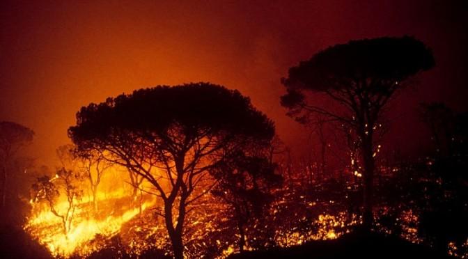 La forêt et le feu
