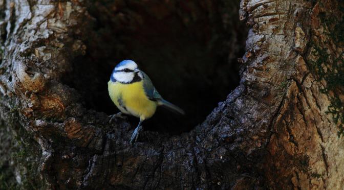Les dendro-microhabitats et la biodiversité forestière